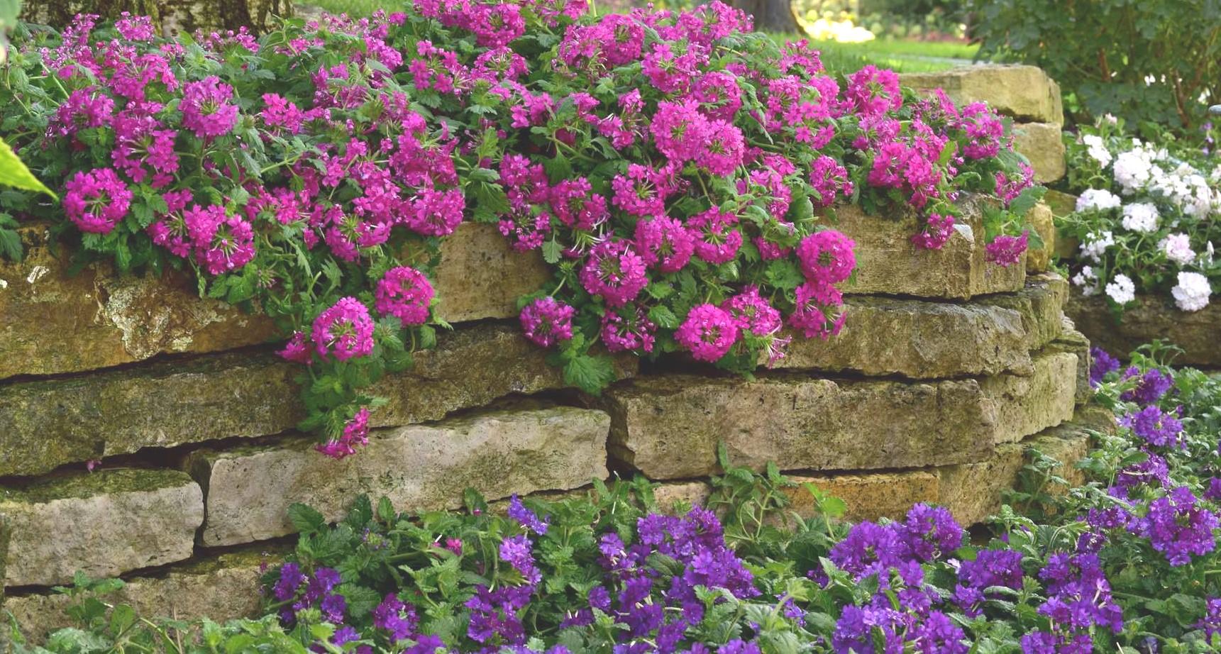 spring-flowers-biwater