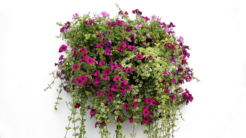 How to Start Container Gardening