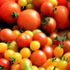 5 Best Tips to Grow Better Tomatoes