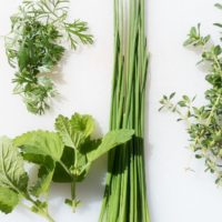 Growing & Caring for Herbs